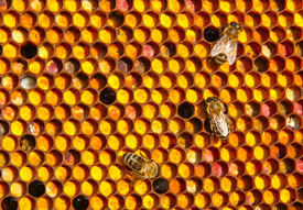 stock photo of unicity  - Farine collected by bees placed by them in honeycombs. All of it is a meal for young bees ** Note: Slight blurriness, best at smaller sizes - JPG