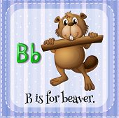 foto of letter b  - Flashcard letter B is for beaver - JPG