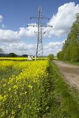 picture of power transmission lines  - A yellow blossoming colza field a transmission tower and power lines as symbol for green alternative power - JPG
