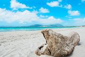 picture of driftwood  - driftwood by the shore in Maria Pia beach Alghero - JPG