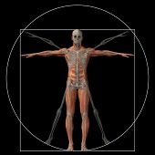 picture of human neck  - Vitruvian human or man as a concept - JPG
