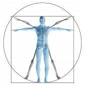 image of human neck  - Vitruvian human or man as a concept - JPG