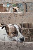 image of stray dog  - Stray dog behind the corral of a dog refuge - JPG