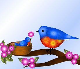 picture of bluebird  - Cute baby blue and orange bird  - JPG