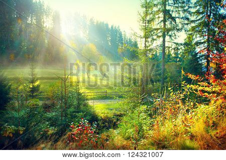 Autumn Nature scene. Beautiful morning Misty Old Forest and meadow with Sun Rays, Shadows and Fog. F