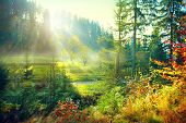 Autumn Nature scene. Beautiful morning Misty Old Forest and meadow with Sun Rays, Shadows and Fog. F poster