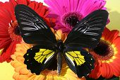bright colors butterfly