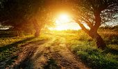 rural road at sunset in the woods poster