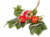 image of wild-brier  - Rose hip isolated on white background - JPG