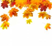 picture of fall leaves  - Autumn background of colored leafs - JPG