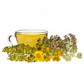 stock photo of tansy  - cup of herbal tea and fresh herb isolated on white background - JPG