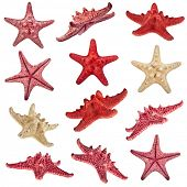 image of echinoderms  - Starfish family - JPG
