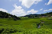 pic of hump day  - This photo is near the Iwami Ginzan Silver Mine in Japan - JPG