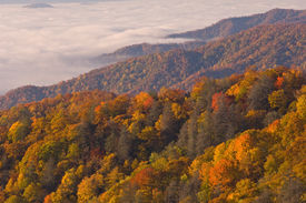 foto of smoky mountain  - Autumn Great Smoky Mountains National Park shortly after sunrise North Carolina USA - JPG