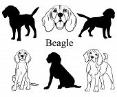 Beagle Set. Collection Of Pedigree Dogs. Black White Illustration Of A Beagle Dog. Vector Drawing Of poster