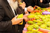 Religious Jew with a gray beard chooses etrog for the holiday Sukkot. The annual pre-holiday bazaar  poster