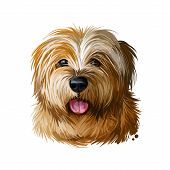 Norfolk Terrier, Watercolor Portrait Of Canis Lupus Familiaris Digital Art. Dog Originated From Grea poster