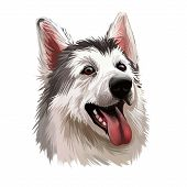 Northern Inuit Dog, Watercolor Portrait Of Canis Lupus Familiaris Closeup Digital Art. Isolated Pupp poster