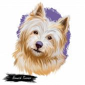 Norwich Terrier Pet With Long Fur And Kind Muzzle Digital Art. Canis Lupus Familiaris, Pet Of United poster