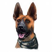 Plott Hound Dog Portrait Isolated On White. Digital Art Illustration Of Hand Drawn For Web, T-shirt  poster