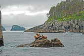 Sea Lions On A Lonely Ocean Outcrop