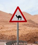 pic of quicksand  - Triangular road sign with warning for crossing camels - JPG
