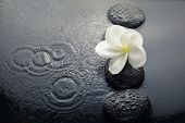 Shiny Zen Stones With Water Drops And Plumeria Flower. Top View poster