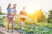 Portrait of a family of famers carrying their vegetables home in wooden boxes, at the end of the day poster