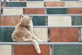 Orange Cat Tabby Feline Licking Grooming On Stairs poster