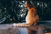 Orange Cat Tabby Feline Sitting On Floor poster