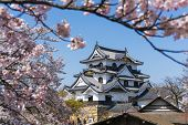Hikone Castle With Sakura Blooming Season poster