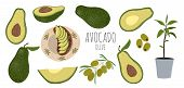 Vector Set Of Colorful Avocado - Half, Slice, Whole, Sliced Into A Sandwich And Avocado Tree With Le poster