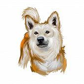 Norwegian Buhund Puppy From Scandinavia, Portrait Digital Art poster