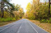 Autumn Is All Around Us. Road Through Autumn Forest. Desolate Road On Natural Landscape. Asphalt Roa poster
