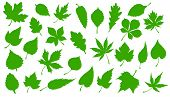 Tree Green Leaves Isolated Silhouette Icons. Vector Forest Trees Leaf Of Maple, Rowan Or Chestnut An poster