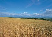 Crop Plains poster