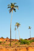 Постер, плакат: Palm Trees On Arabian Sea Coastline