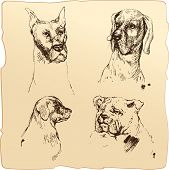 stock photo of bloodhound  - Set of Dogs heads  - JPG