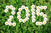 foto of greenery  - 2015 with daisies on shamrocks in greenery - JPG