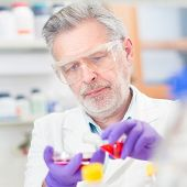 stock photo of scientific research  - Life scientist researching in laboratory - JPG