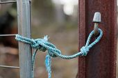 stock photo of nylons  - Make shift latch to secure a rural gate using blue nylon rope - JPG