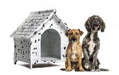 picture of spotted dog  - Two Crossbreed dogs sitting in front of a spotted kennel - JPG