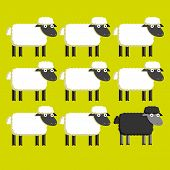 picture of baby sheep  - A Vector Group Of White Sheep And A Black Sheep - JPG