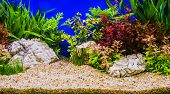 stock photo of tropical plants  - Aquascaping of the beautiful planted tropical freshwater aquarium  - JPG