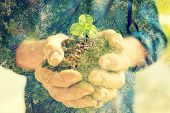 stock photo of ecology  - Senior woman holding young spring plant in hands for ecology and agriculture concept - JPG