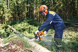 image of cutting trees  - Lumberjack logger worker in protective gear cutting firewood timber tree in forest with chainsaw - JPG