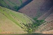 pic of hell  - Forest of Trees Nestled In The Slopes of Hells Canyon - JPG