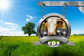 picture of food chain  - Dairy products sign with head of cow cans for the transport of milk green grass and three daisy flowers - JPG