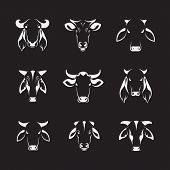 stock photo of cow head  - Vector set of cow head on black background - JPG