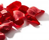 stock photo of red rose  - Petals of a rose - JPG